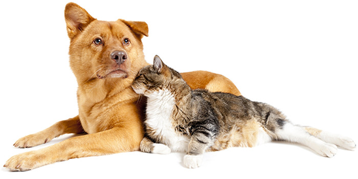 Rimedio Naturale per i Nostri Amici Animali